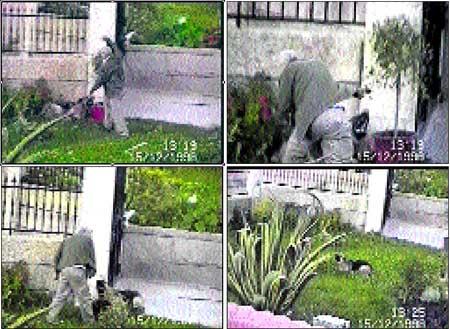 José Lago matando a su perro