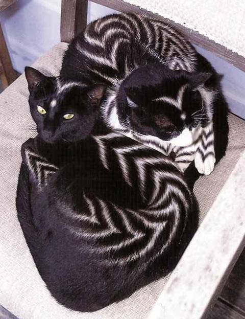 gatitos pintados